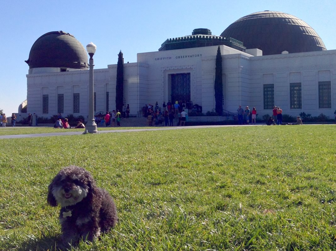 Willie at the Griffith Observatory