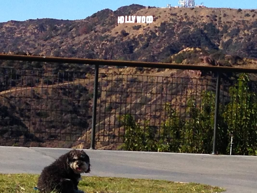 Hollywood Sign from the Griffith Observatory