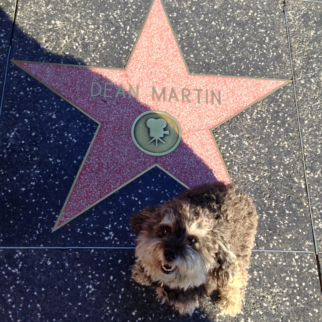 Willie at Dean Martin's star on the Hollywood Walk of Fame