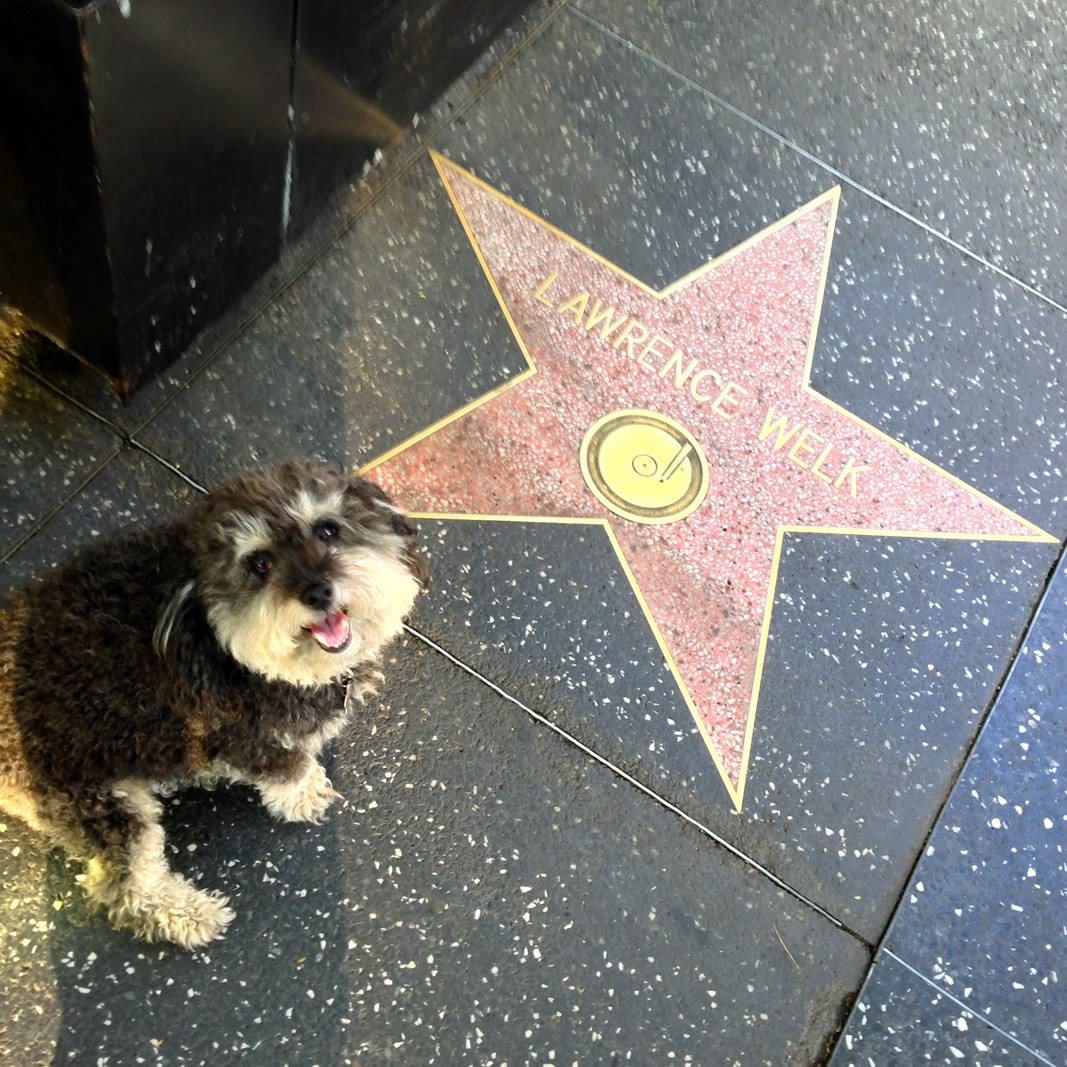 Willie at Lawrence Welk's star on the Hollywood Walk of Fame