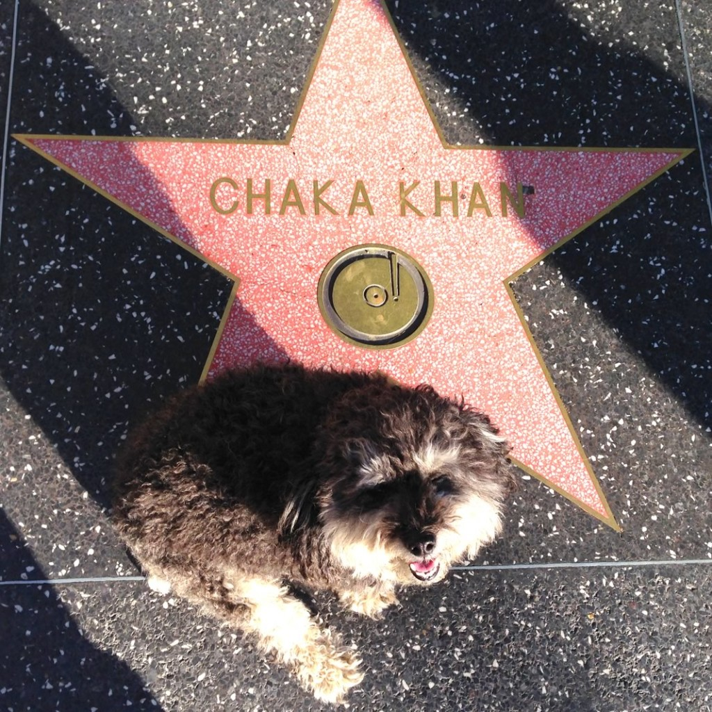 Willie at Chaka Khan's star on the Hollywood Walk of Fame