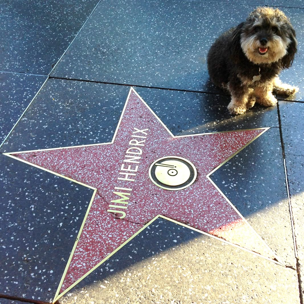 Willie at Jimi Hendrix's star on the Hollywood Walk of Fame