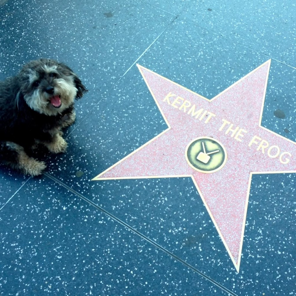 Willie at Kermit the Frog's star on the Hollywood Walk of Fame