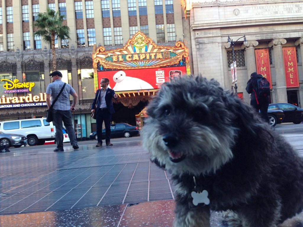 Willie walks the Hollywood Walk of Fame