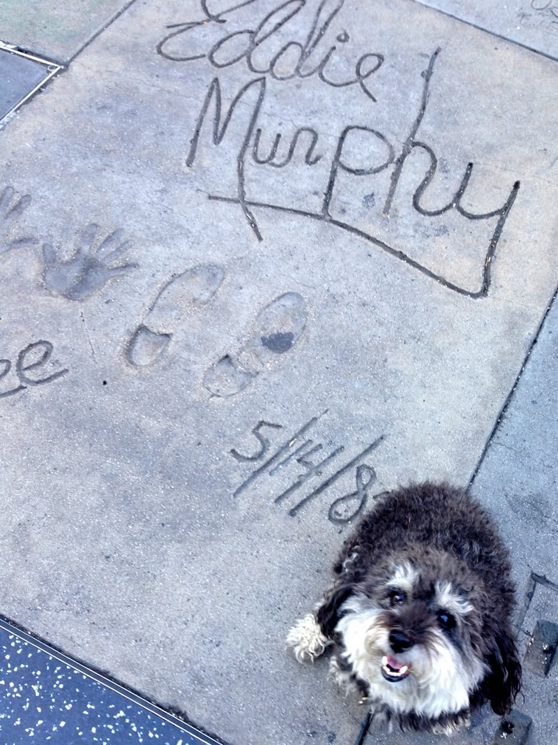 Willie at Eddie Murphy's spot on the Hollywood Walk of Fame