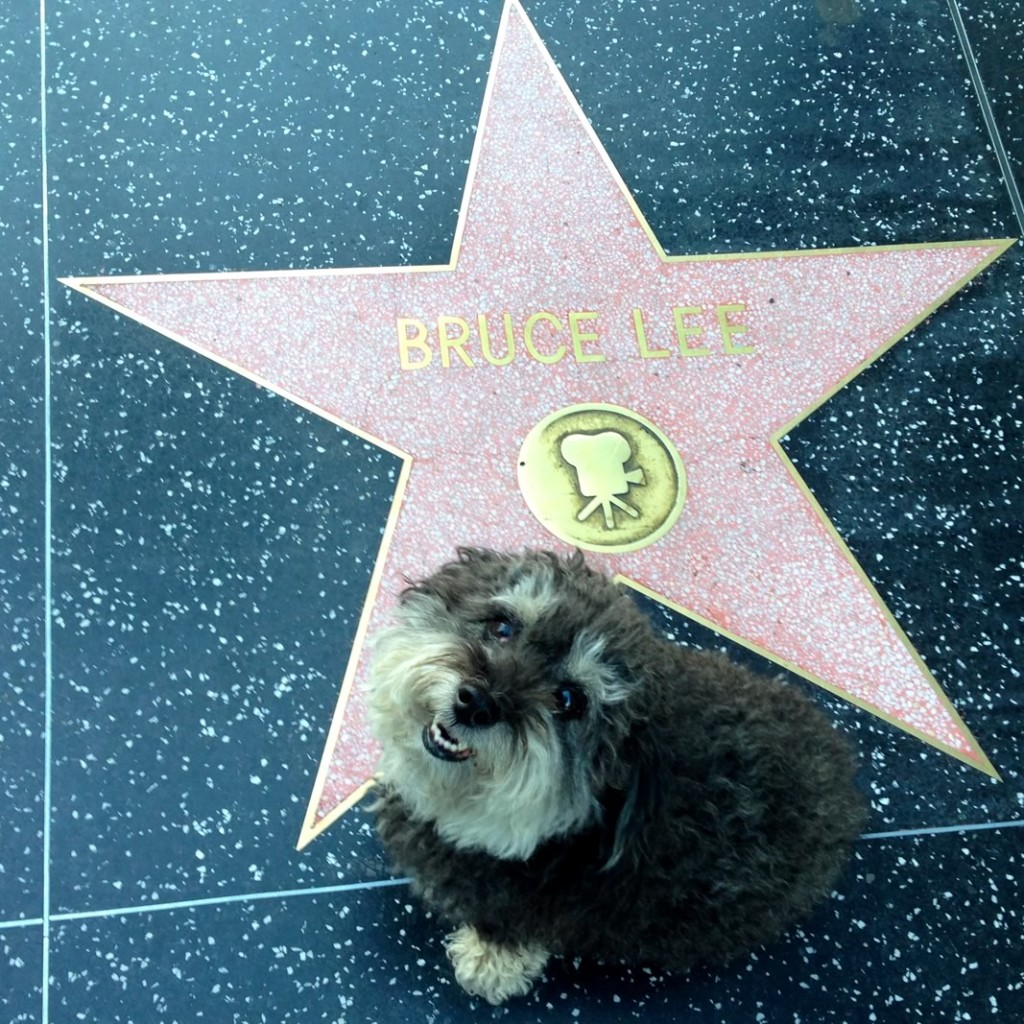 Willie at Bruce Lee's star on the Hollywood Walk of Fame