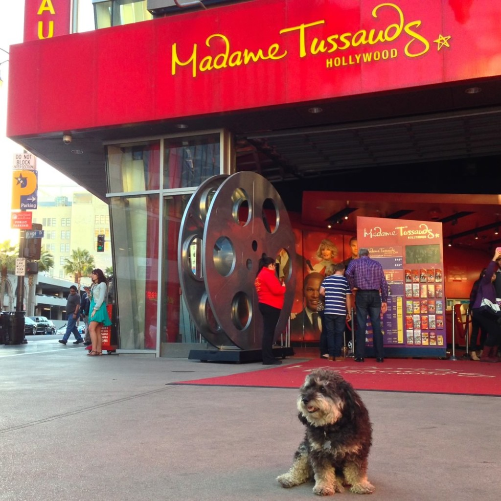 Willie at Madame Tussauds in Hollywood California