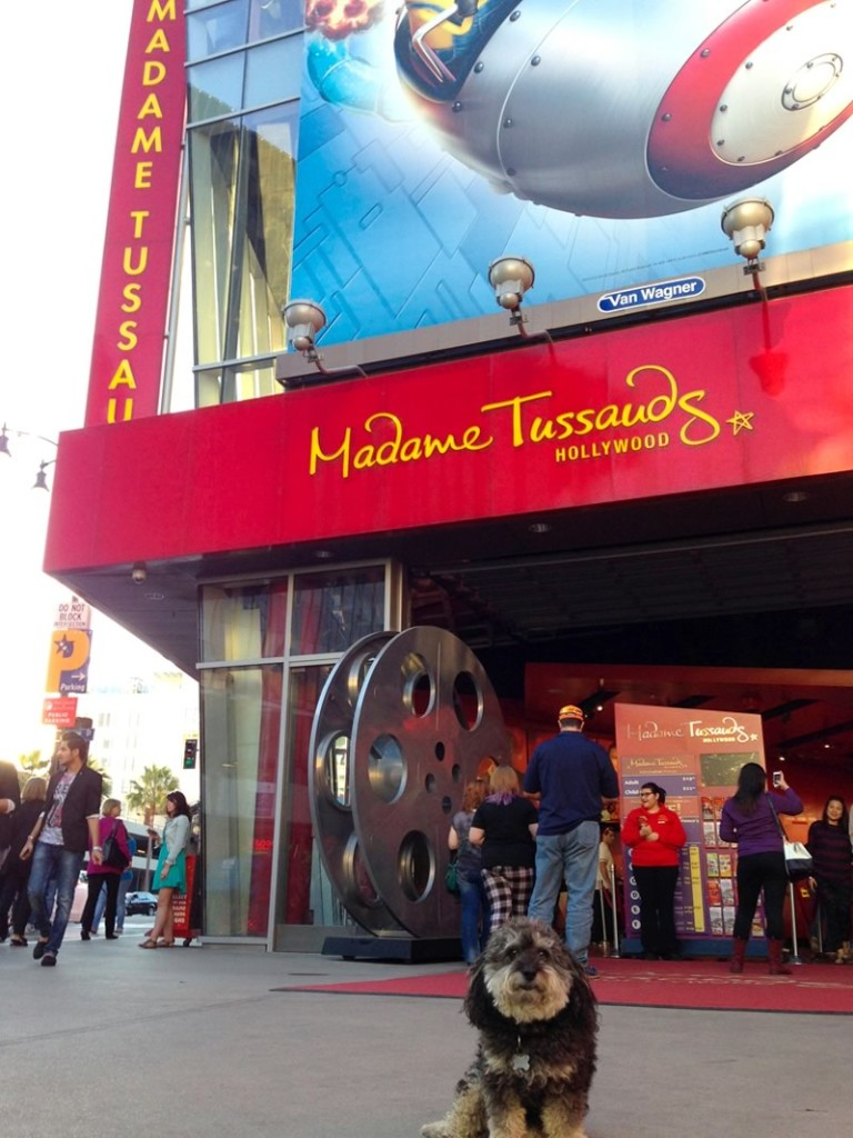 Willie at Madame Tussauds Wax Museum in Hollywood, CA