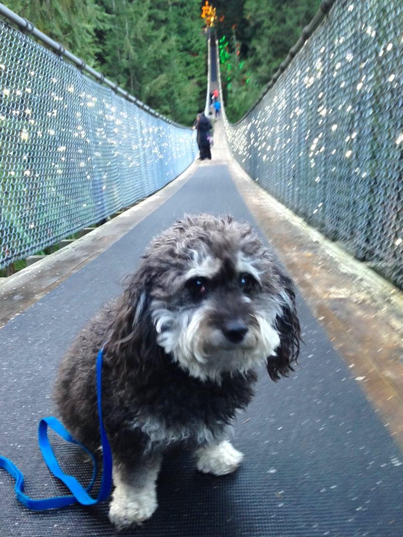 Capilano Suspension Bridge - Vancouver, BC