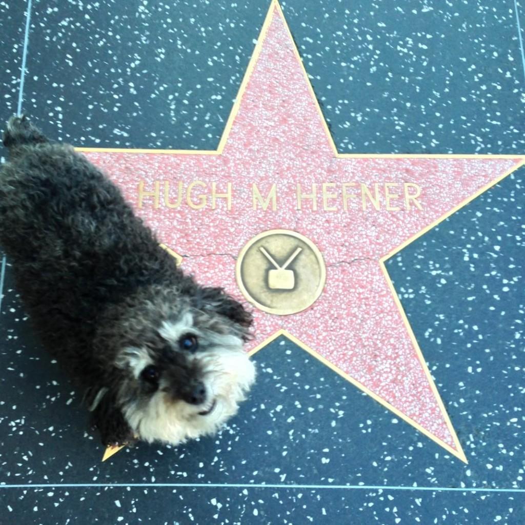 Willie at Hugh Hefner's star on the Hollywood Walk of Fame