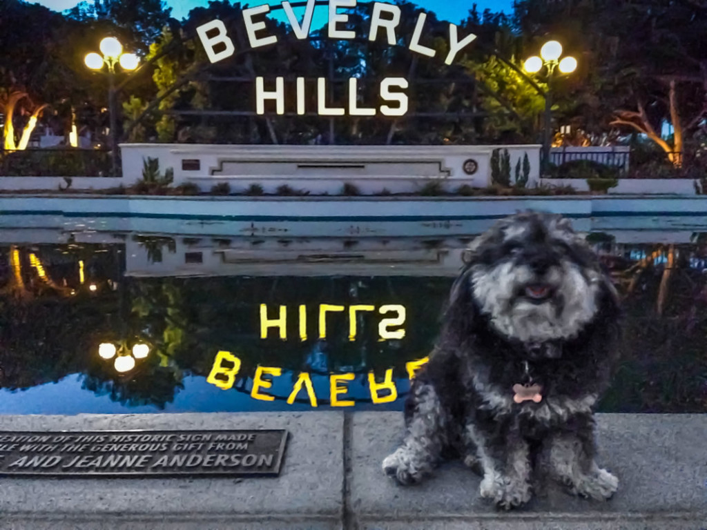 Willie in front of the Beverly Hills sign in California