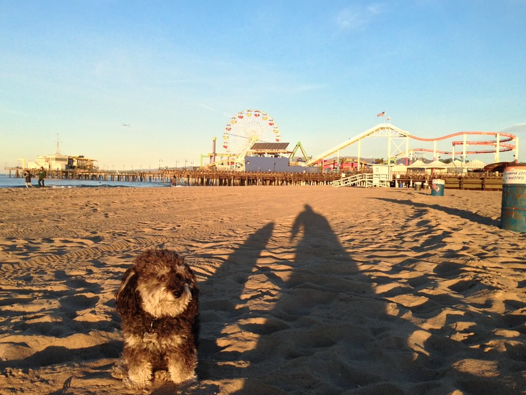 Willie spends the morning at Santa Monica Beach
