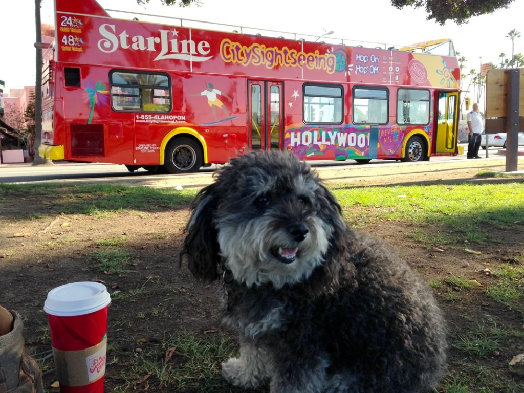 Willie poses in front of a Hollywood Tour Bus in Santa Monica California