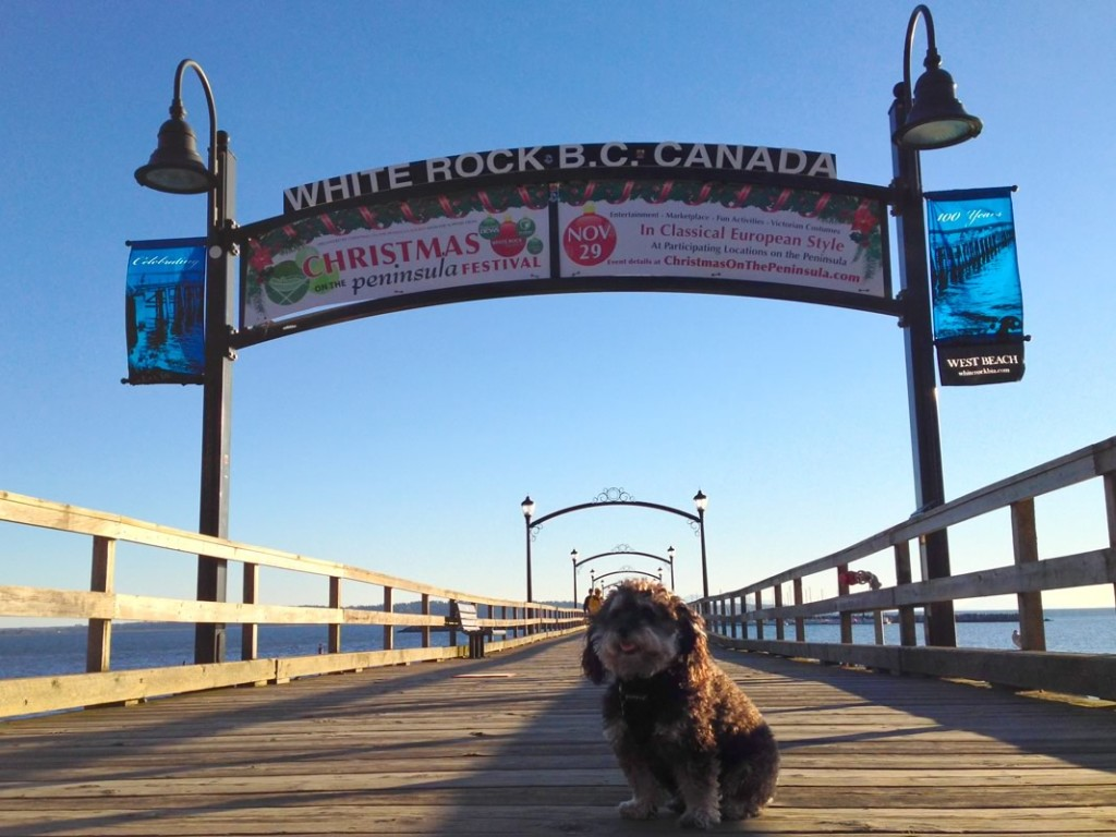 Willie in White Rock British Colombia