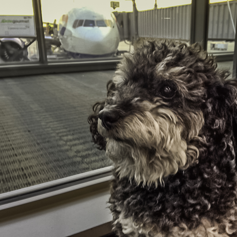 Willie takes the red eye flight out of Tampa Airport