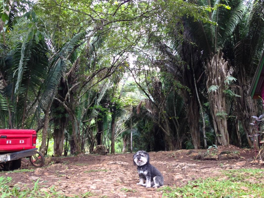 Willie at the Pacbitun Farm in San Antonio Belize