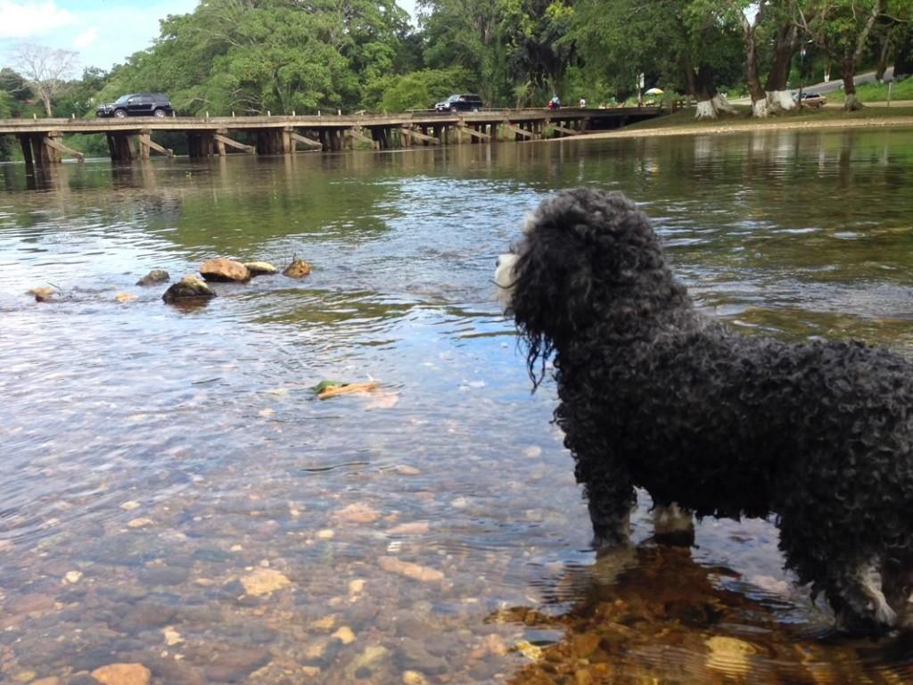 Willie cools off in San Ignacio Belize