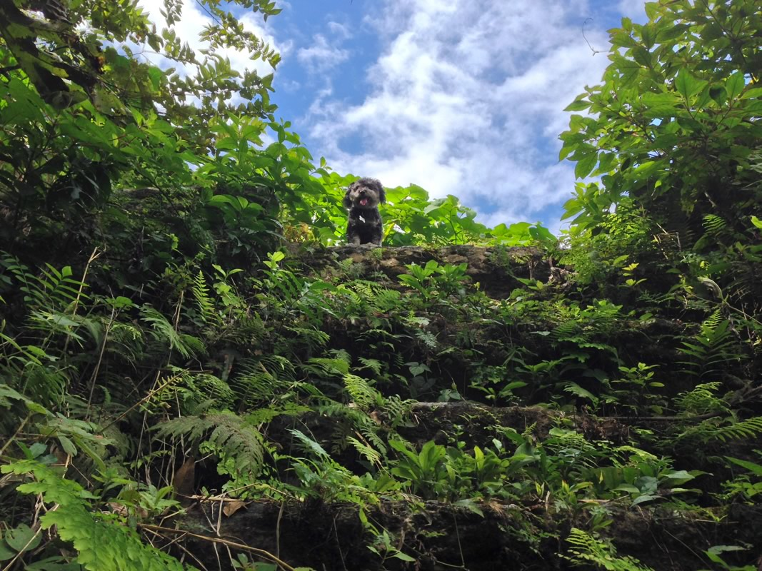 Willie sits on top of unexcavated Mayan ruins in San Antonio Belize