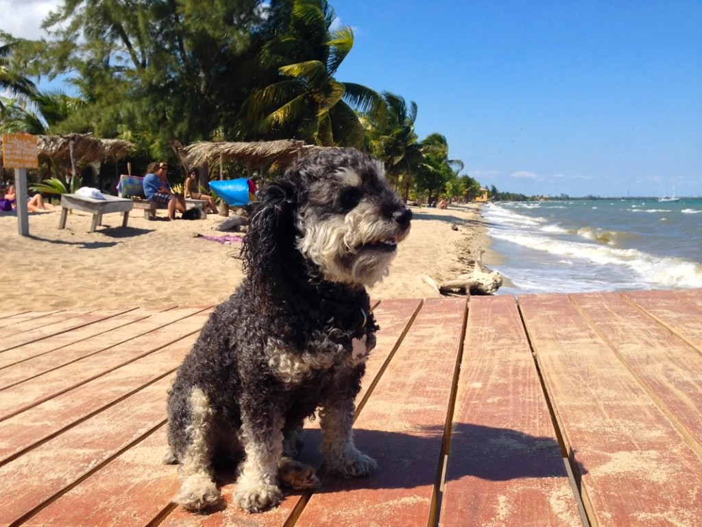 Willie on the beach in Hopkins Belize