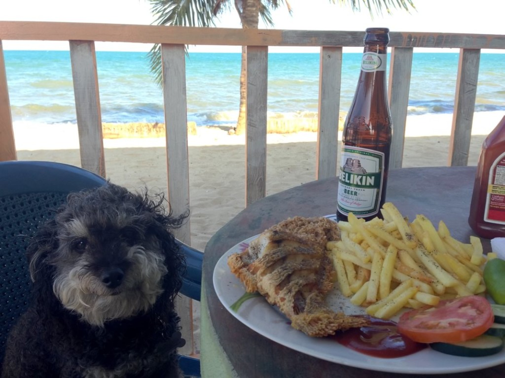 Willie having fish and chips on the beach in Hopkins Belize