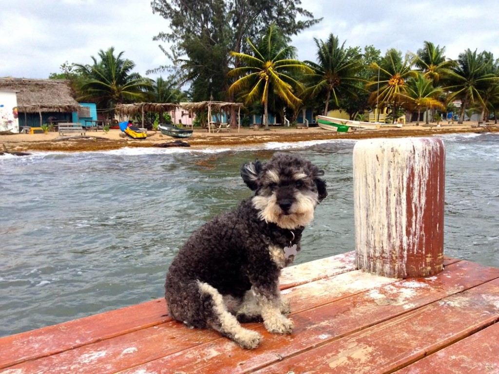 Willie on the dock in Hopkins Belize