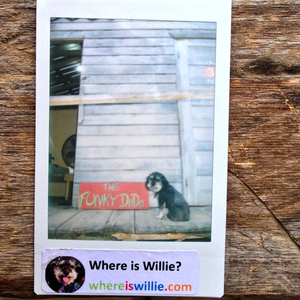 Polaroid of Willie at the Funky Dodo in Hopkins Belize