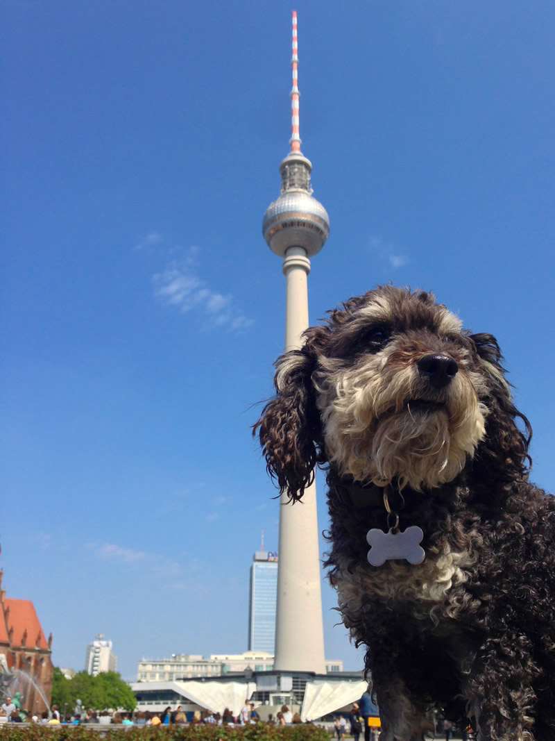 Willie at The Fernsehturm in Berlin Germany