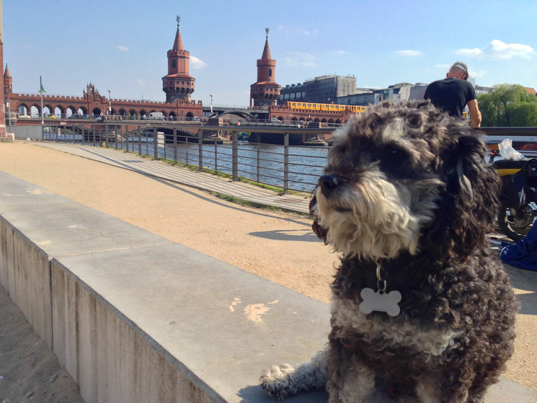 Willie next to the Oberbaum Bridge in Berlin Germany