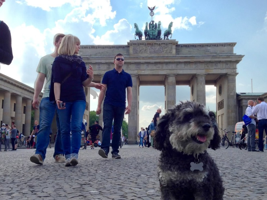 Willie at Brandenburg Gate in Berlin Germany