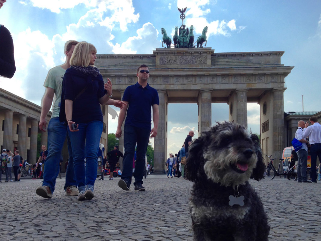 Willie at Brandenburg Gate in Berlin Germany