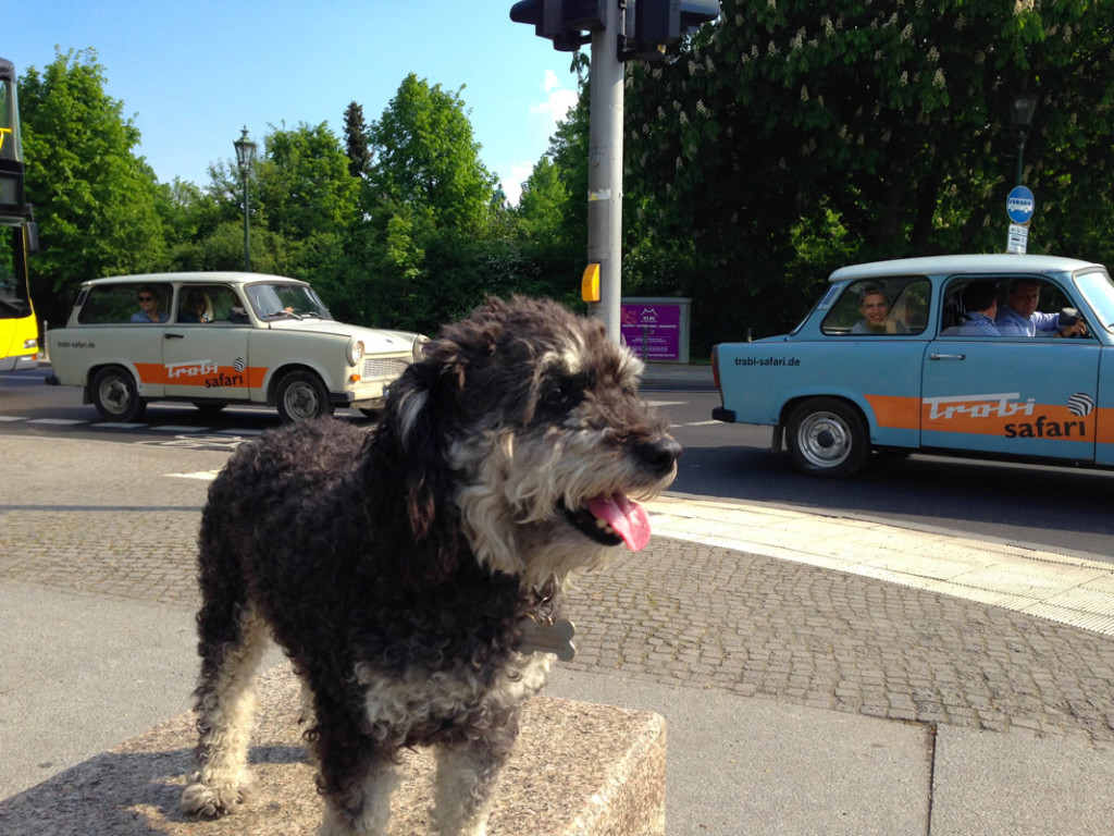 Willie next to the Classic East German Car - The Trabi in Berlin Germany