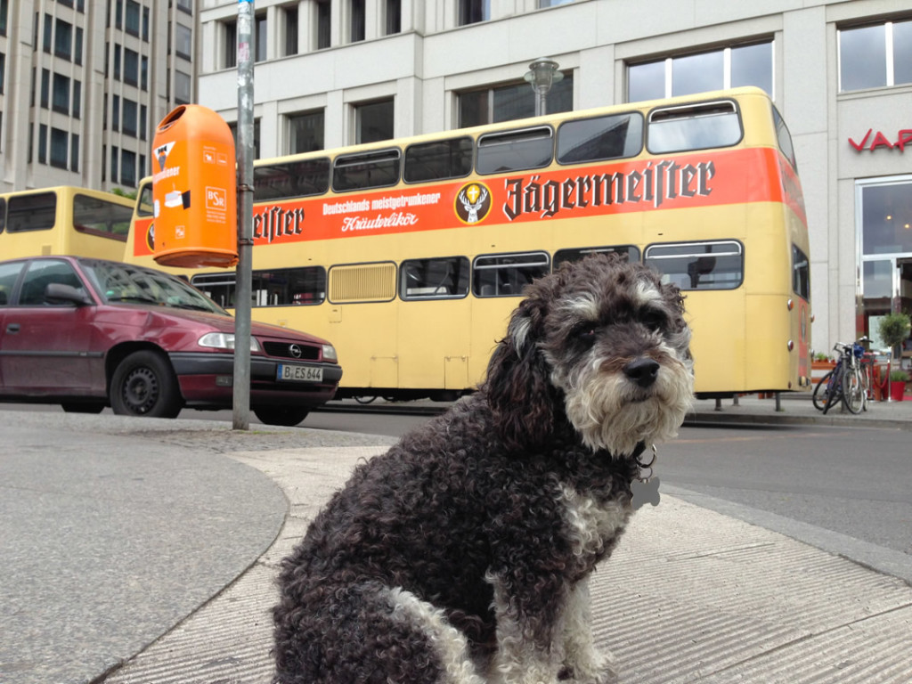 Willie with a Jagermeister Bus in Berlin Germany