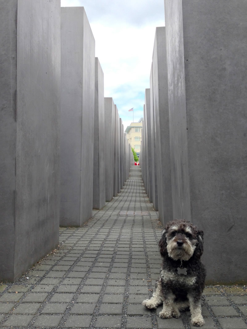 Willie at the Holocaust Memorial in Berlin Germany