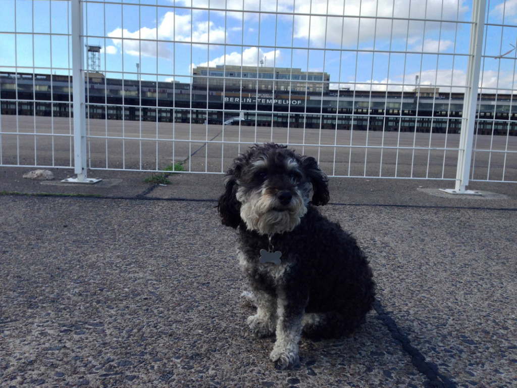 Willie spends an afternoon at Tempelhofer Field in Berlin Germany