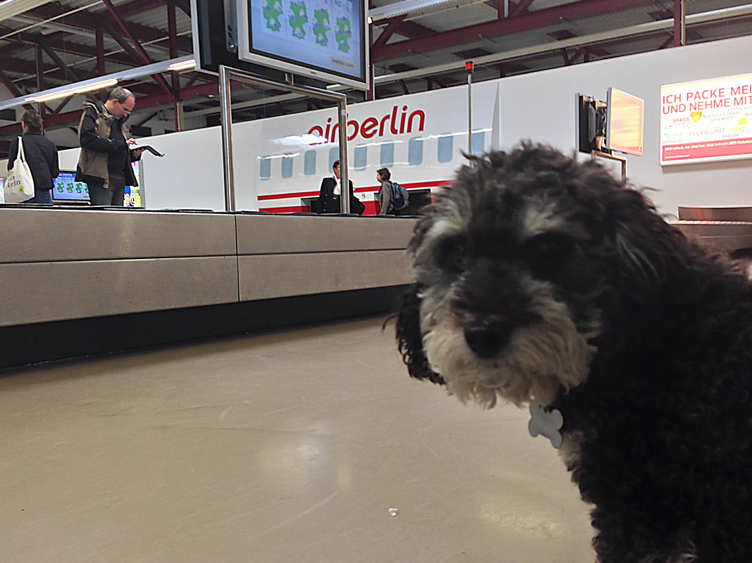 Willie waiting for his bags at Berlin Tegel Airport Germany