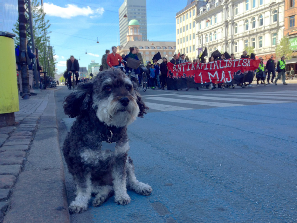 Willie leads the May 1st Anti-Kapitalistisk Parade in Copenhagen Denmark