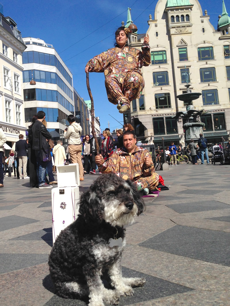 Willie watches street entertainers in Copenhagen Denmark