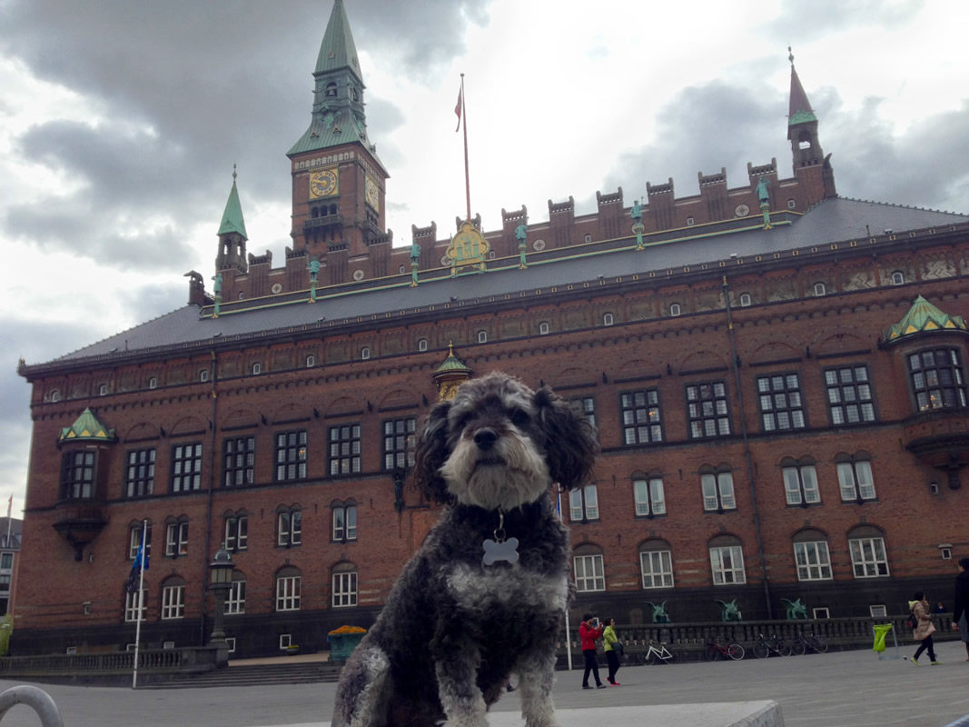 Willie in front of Jens Olsen's World Clock - City Hall in Copenhagen Denmark