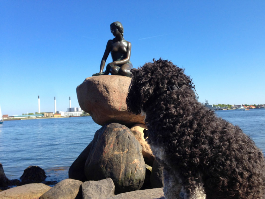 Willie at The Little Mermaid in Copenhagen Denmark