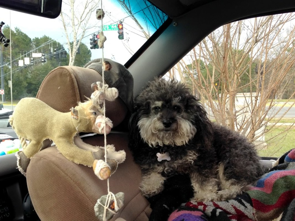 Willie riding shotgun on his road trip from New Orleans to Canada