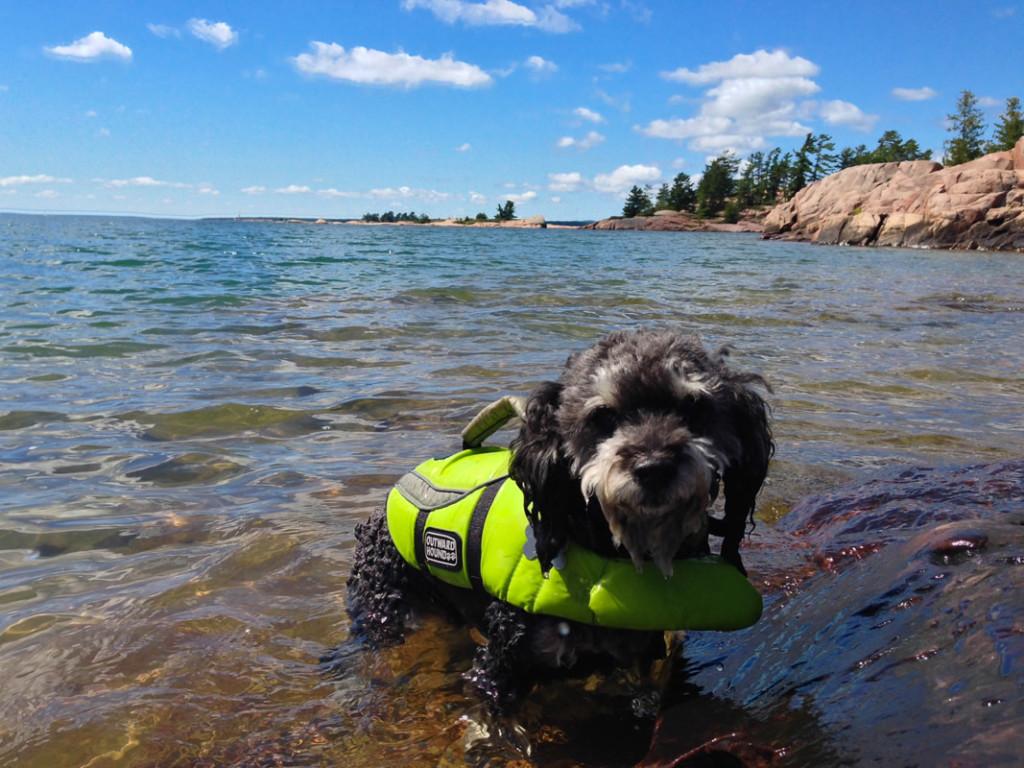 Willie visits Killarney Provincial Park