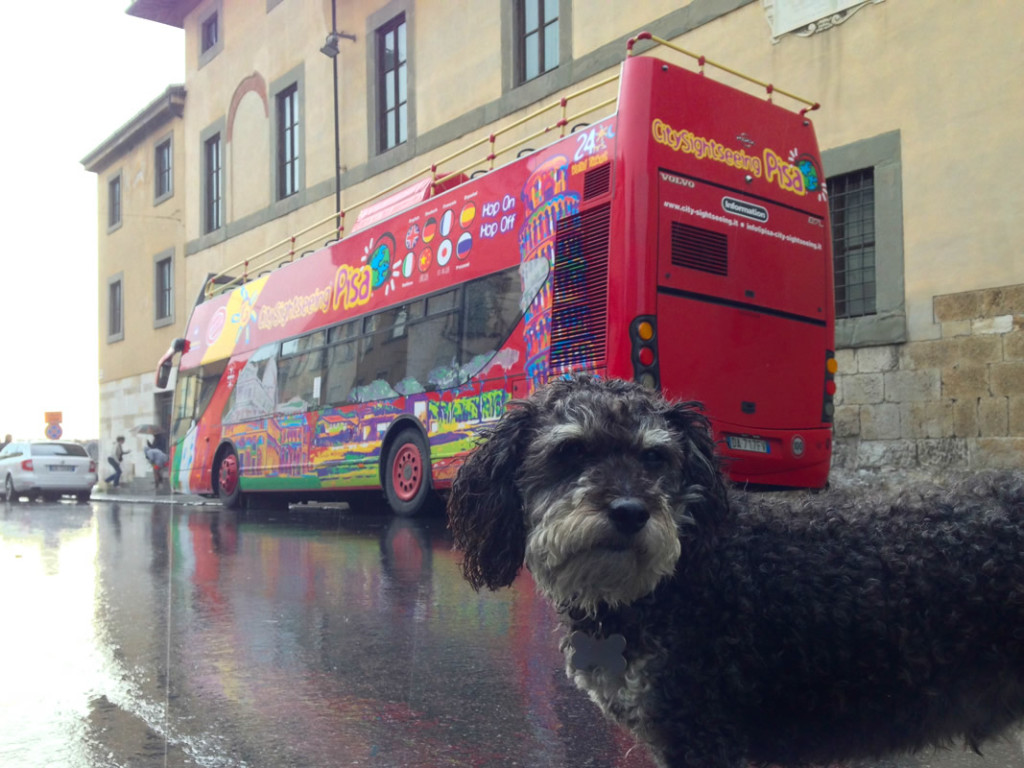 Willie in front of a Pisa Tour Bus near the Leaning Tower of Pisa