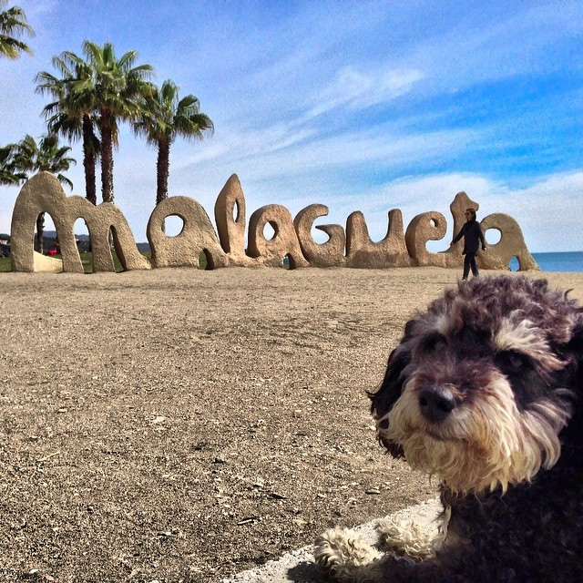 Willie hangs on the beach in Playa de la Malagueta Spain