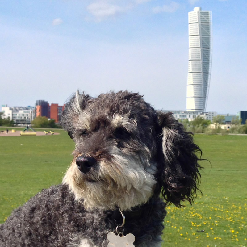 Willie at the Turning Torso in Malmo Sweden