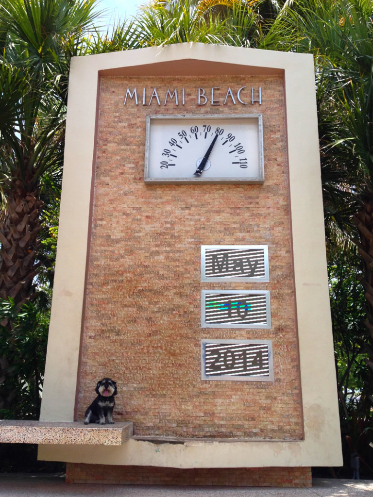Willie at the temperature date clock in South Beach Miami Florida