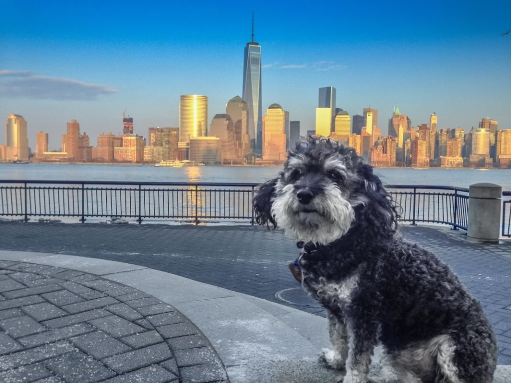 Willie in Jersy City looking over the Hudson River onto Manhattan New York City