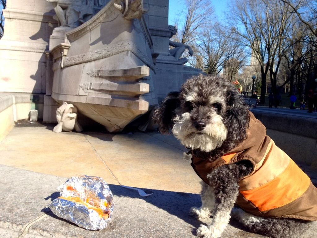 Willie eats a hot dog at Central Park in New York City