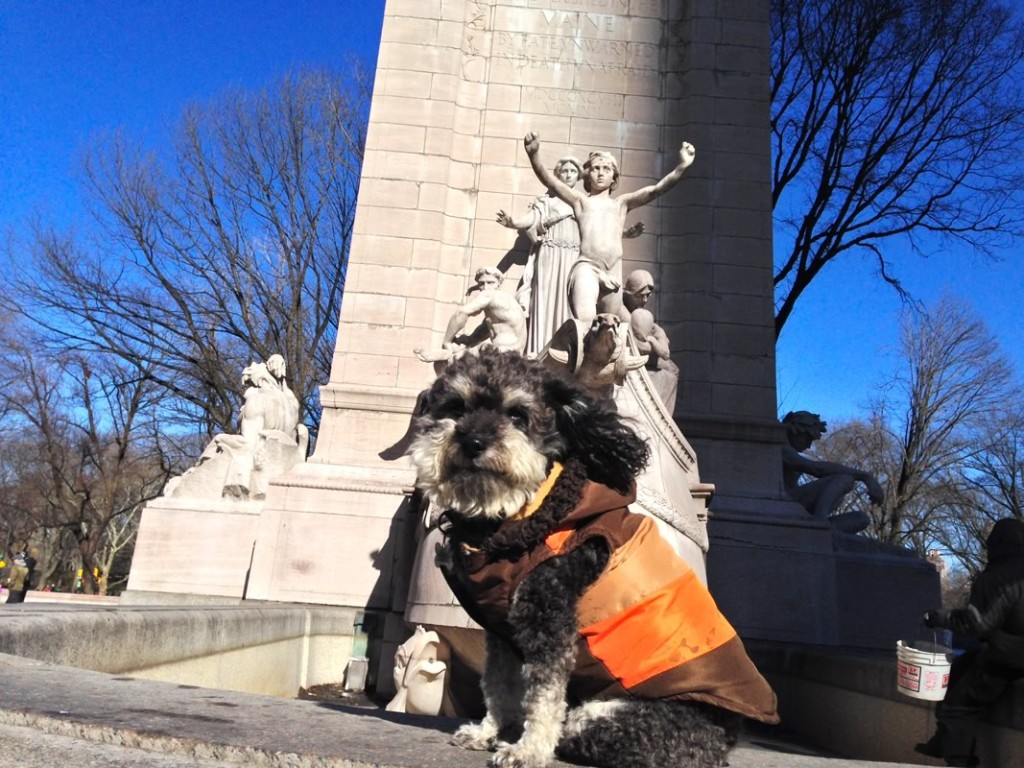 Willie at Central Park in New York City