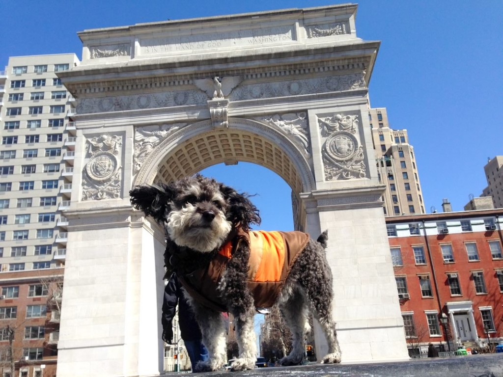 Willie at Washington Square Park in New York City