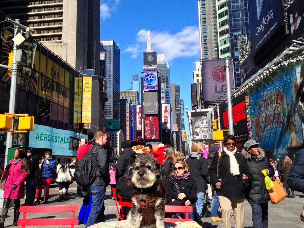 Willie at Times Square in New York City